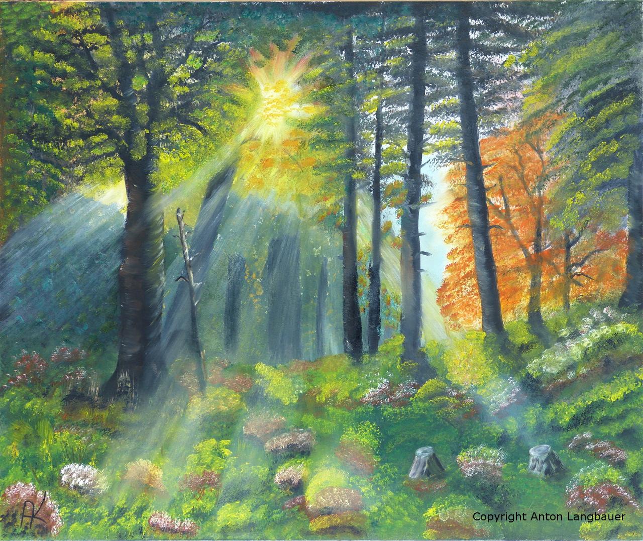 Morgenstimmung Wald
